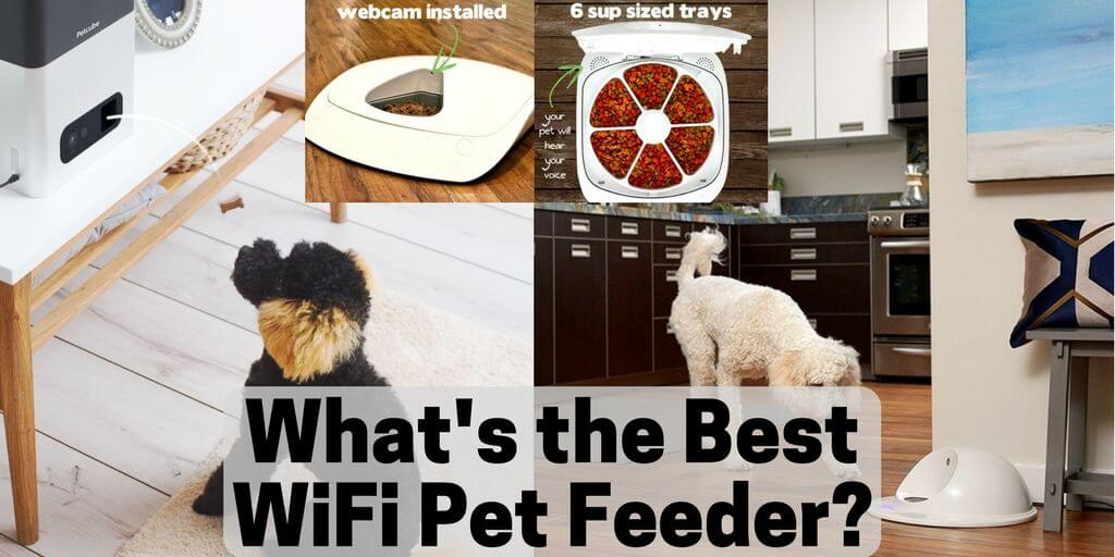 best wifi pet feeder twitter