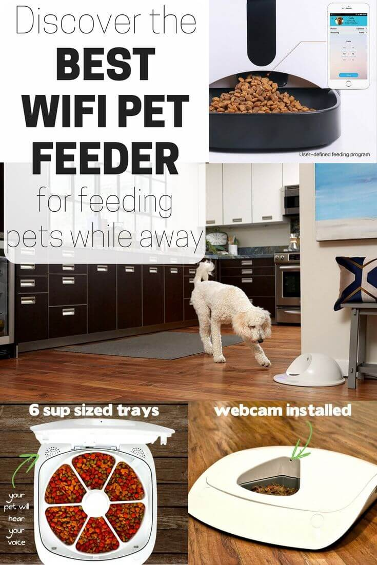 best wifi pet feeder