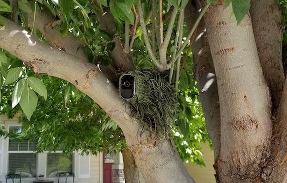 Arlo Pro Tree